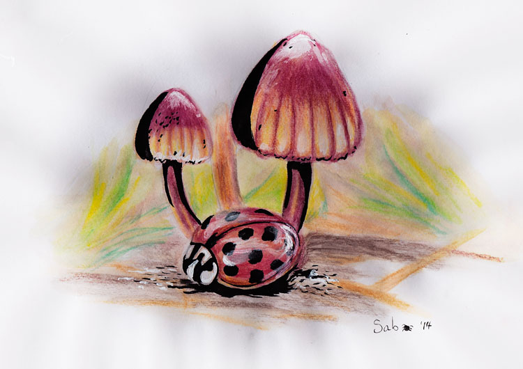 WatercolourPencil-Ladybug