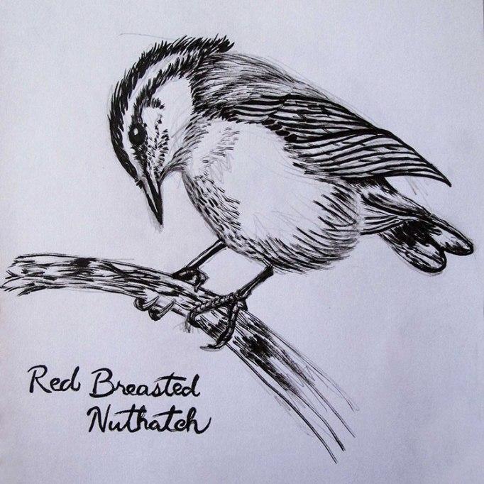 WetMedia-Nuthatch