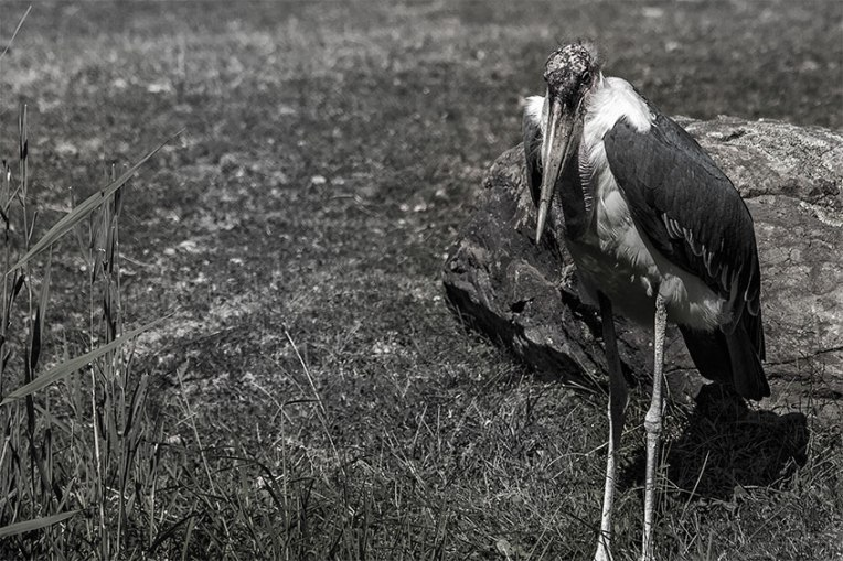 Photography-BW_crane