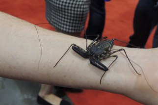 Fan Expo: it's that... thing... from Harry Potter!
