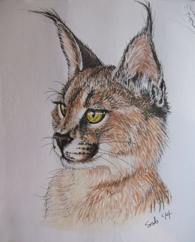 Caracal Portrait: My latest attempt at rendering fur using Promarkers
