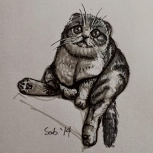 Extra : OMG Scottish Folds <3