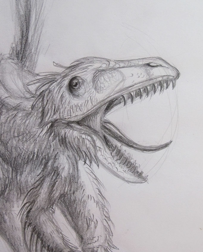 NatureSketching-Dinosaur-Dromaeosaurus-Cropped