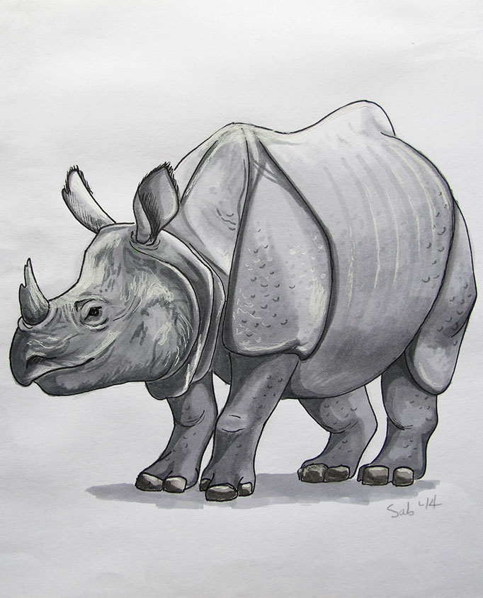 NatureSketching-Rhino-PenMarkers