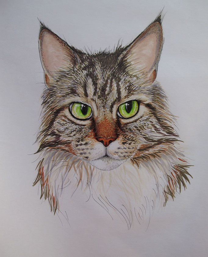 CatPortrait-Roosevelt-Coloured