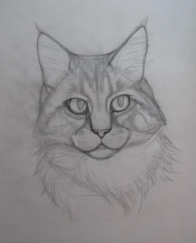 CatPortrait-Roosevelt-Sketch