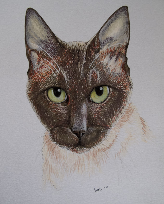 CatPortrait-Topaze-Full-Updated