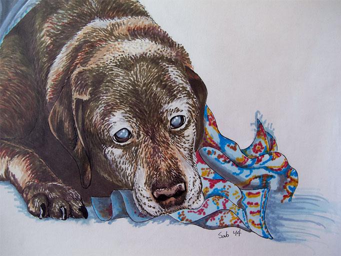 DogPortrait-Candy-closeup