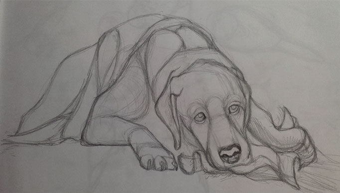 DogPortrait-Candy-sketch
