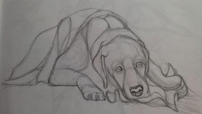 DogPortrait-Candy-sketch