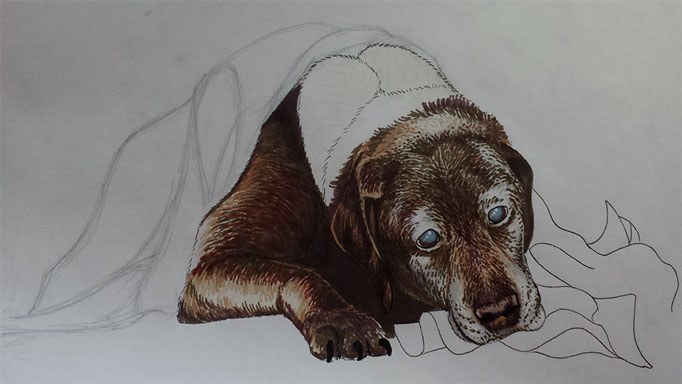 DogPortrait-Candy-WIP