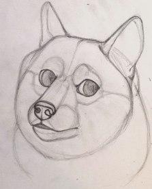 Doge Sketch