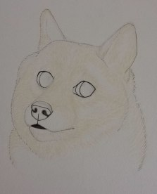 Doge WIP
