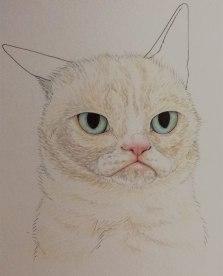 Grumpy WIP